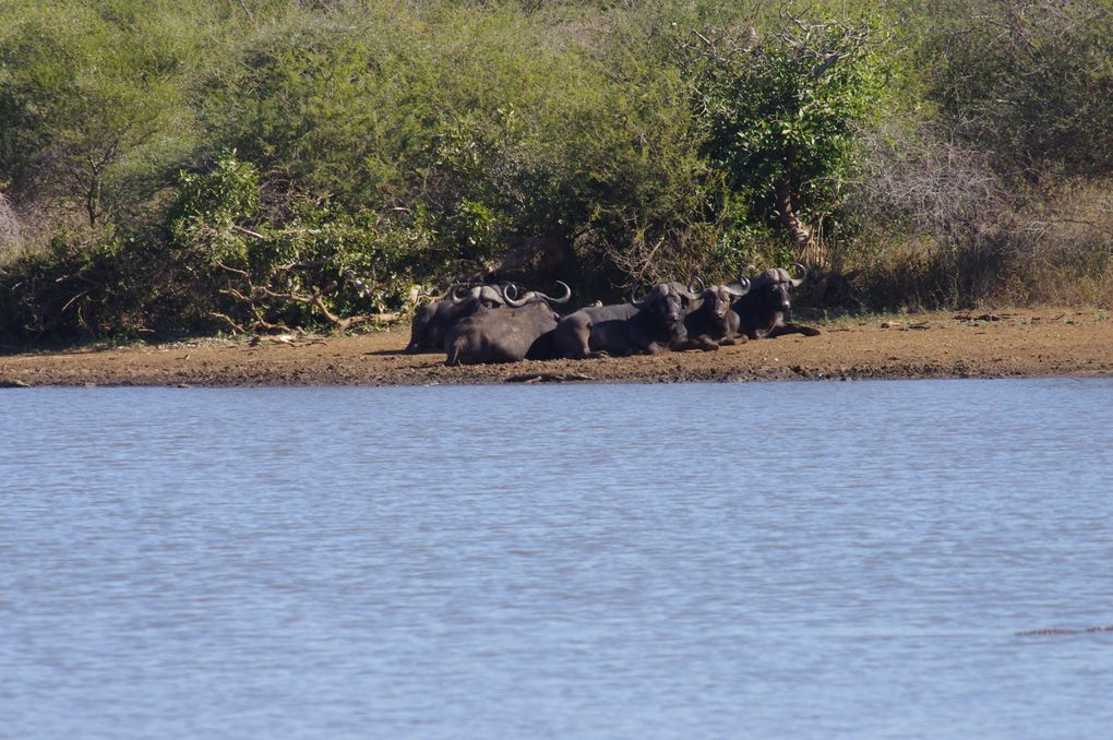 Album - 118---PARC-KRUGER/ BLYDE RIVER CANYON