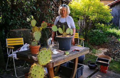 Rempotage des opuntias du jardin par Anne Marie Leidig
