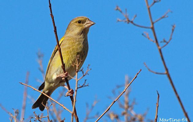Les oiseaux du jour