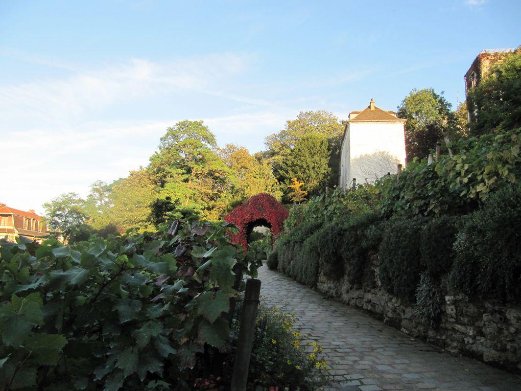 Les vignes de Montmartre en automne