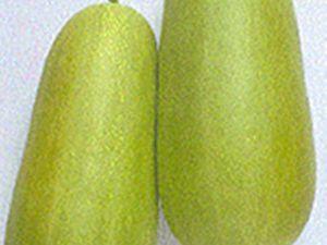 pickling melon