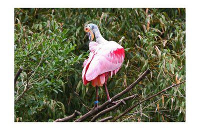 VILLARD-LES-DOMBES - parc des oiseaux