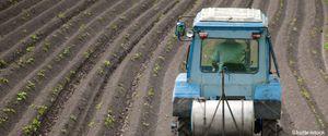 Pesticidoj : la 10 fruktoj kaj legomoj plej infektitaj