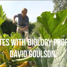 Abeilles : M. Dave Goulson définitivement tombé du côté obscur de la science