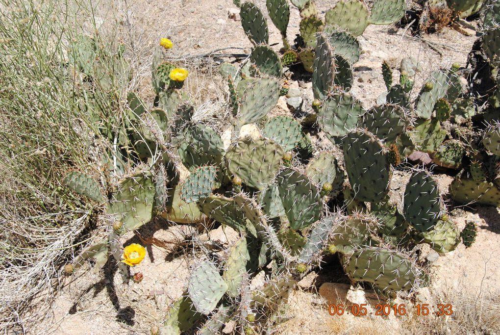 Au pays des cactus