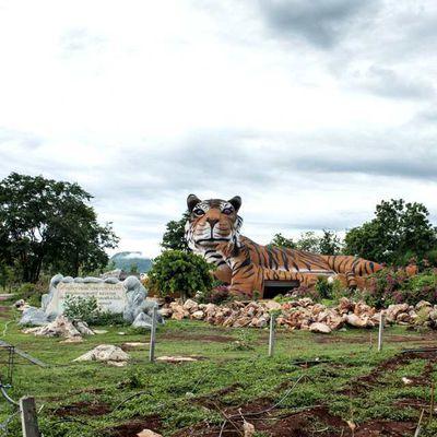Appel à l'aide pour des animaux en danger de mort à Kanchanaburi…