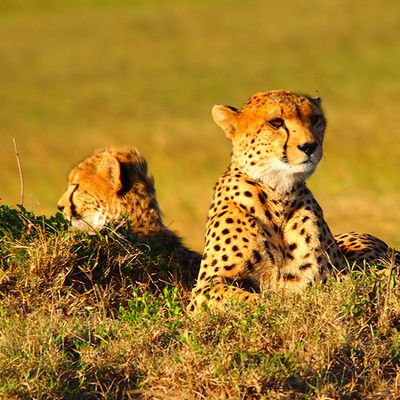 Choose from the Best African Safari Tour Packages for an Enthralling Vacation