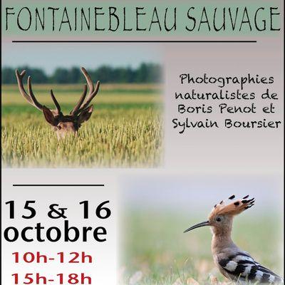 Fontainebleau Sauvage, terminus ...