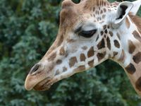 Sortie Zoo de Maubeuge (31/07/2013)