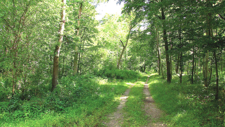 carrefour_Route de Berne_Route d'Humières