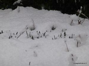 Retour de la neige à Montfalcon