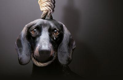 Référendum pour les droits des animaux