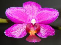 Cymbidium, Oncidium, Phalaenopsis, hoya DS 70 et mésange du jardin.