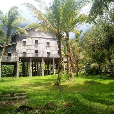Sarawak: des nids d'hirondelles à la culture Dayak
