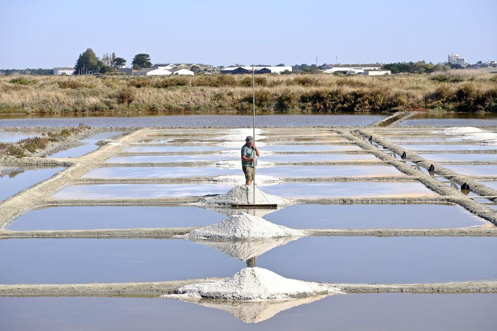 """Les paludiers gèrent les niveaux d'eau dans les différents bassins pour y récolter le sel....ici on échappe à la médiocrité car avant toute chose, avant toute notion de productivité ou autre rentabilité, des mots qui sonnent """"vulgaires"""" et """"pathétiques, les Salines Atlantiques de Guérande s'appliquent à fournir un sel de haute qualité culinaire...; Et puis un clin d'oeil à mes racines avec les salins d'Hyères qui ressemblent à Guérande dans l 'esprit...."""