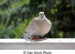 """OISEAUX // """"Observatoire participatif des oiseaux"""" se posant dans son jardin, sur son balcon, dans tel square, ou telle partie de parc citadin... Durée :10 mn - Fréquence :  tous les jours, une fois par mois, ou ponctuellement.... toutes les précisions dans le site ci-dessous"""