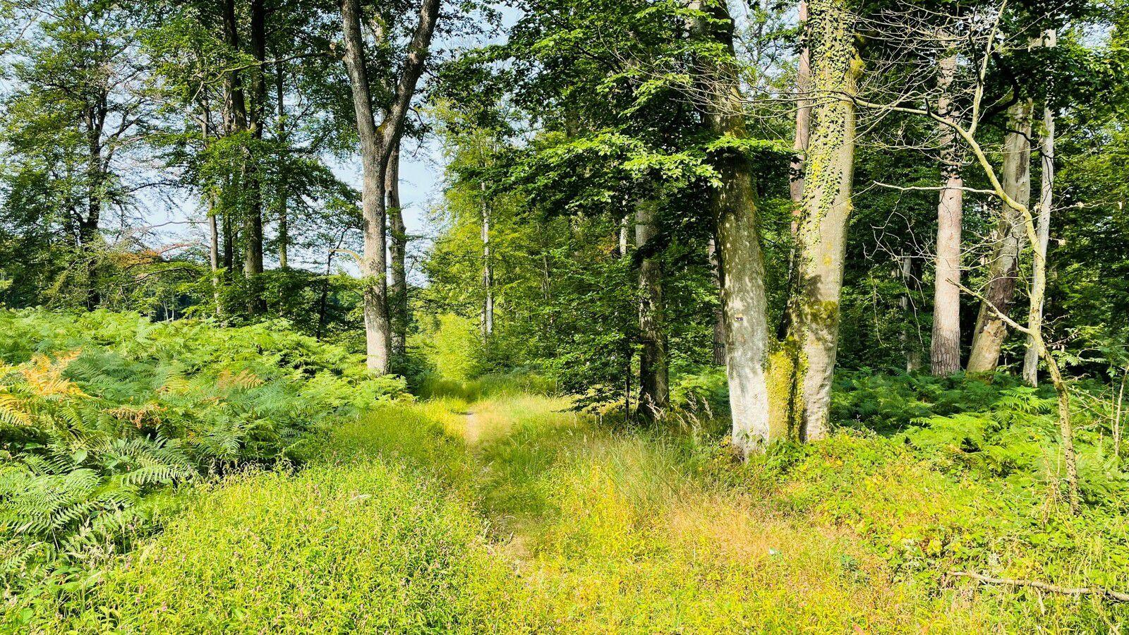 carrefour_Route du Mur du Parc_Laie de Puiseux
