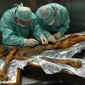 Le dernier repas d'Ötzi : du gras et des fougères toxiques