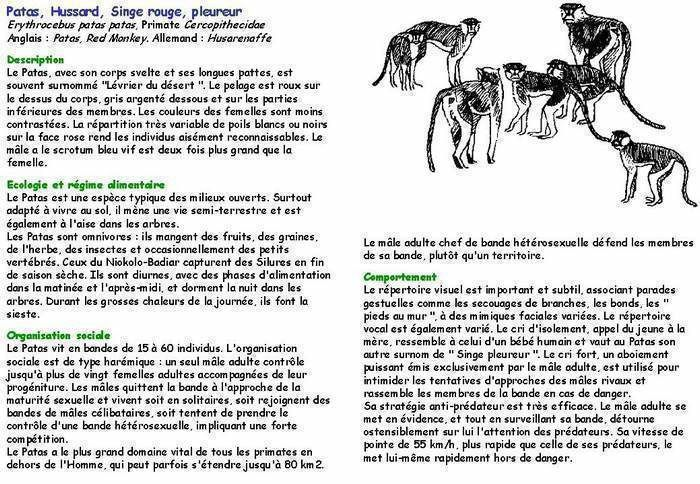 Les mammifères du Fouta