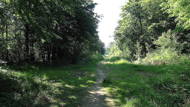 carrefour_Route du Marais de Saint-Léger_Chemin des Plainards