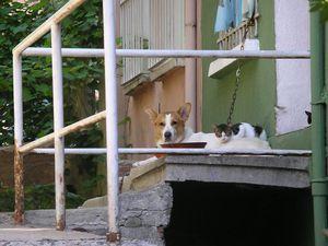 A droite, parfois chien et chat font bon ménage