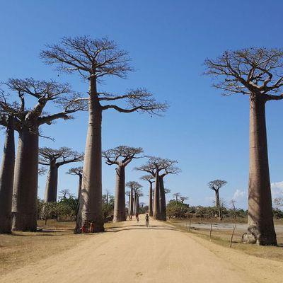 Madagaskar 13. bis 30. August 2017