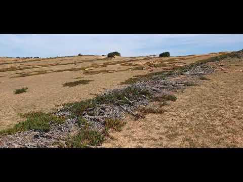 La désertification de Guerbes Sandhadja (Skikda)