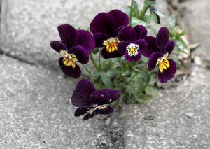 Frühlingsblumen und Blog-Gestaltung