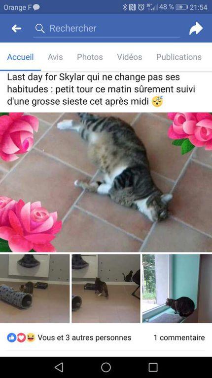 Pension Féline - La Chat'maillerie