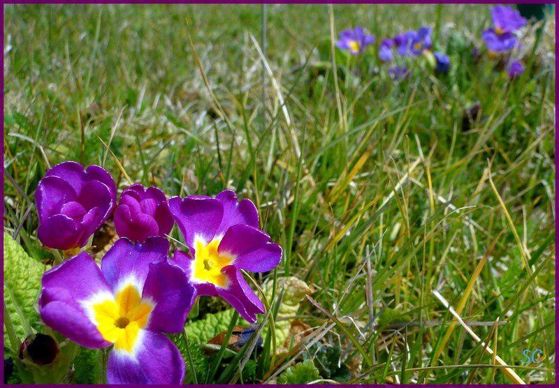 Fleurs, feuilles, arbres, fruits... la flore dans toute sa diversité et ses différentes couleurs !