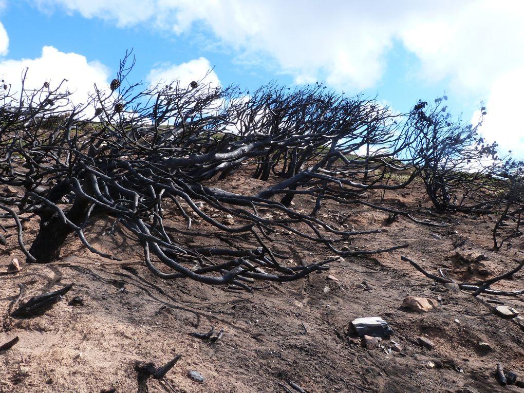 Même si on ne s'en rend pas trop compte sur photos, le coin est vraiment lugubre, on sent qu'il n'y a plus aucune vie, même d'insecte. Presque 2 mois plus tard, l'odeur de bois brûlé persiste encore.