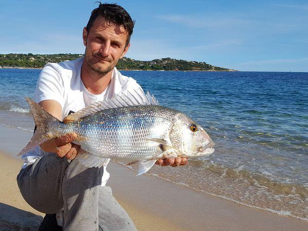La pêche des sparidés en mer méditerranée, daurades, dentis, sars...
