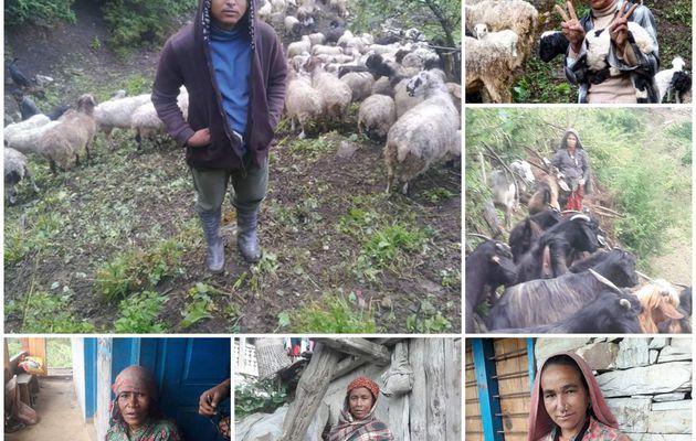 Des moutons pour Mugu