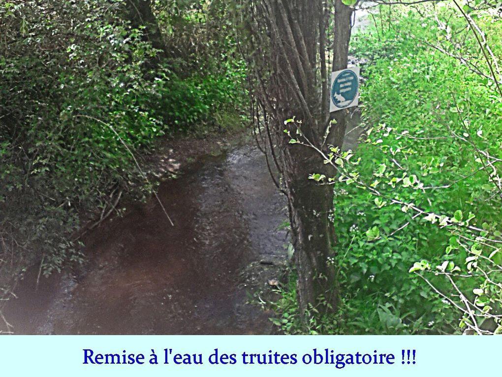 """Les """"8 Km"""" à Vigneux-de-Bretagne"""
