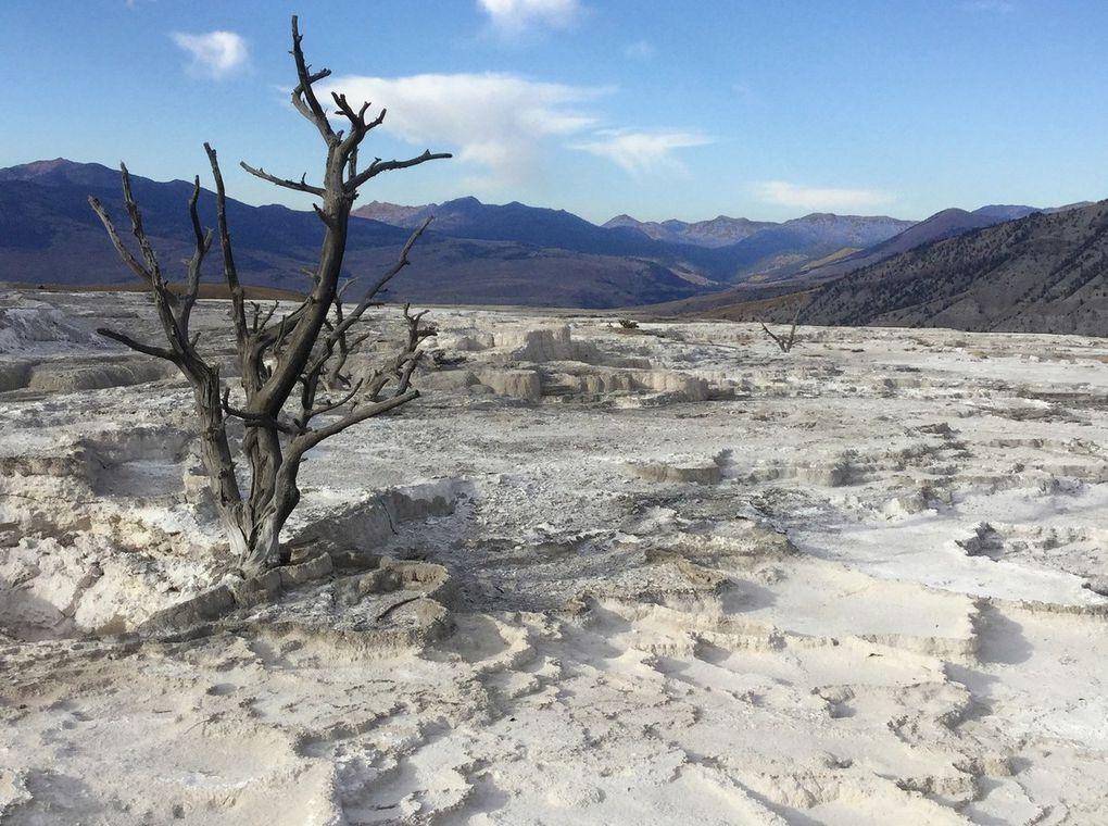 Bon, l'oxyde de fer qui compose les couleurs est surtout présent quand il y a de l'eau et, en cette saison, c'est plutôt la sécheresse qui domine... Toutefois, nous avions déjà constaté la tendance à la calcification en août 2013...