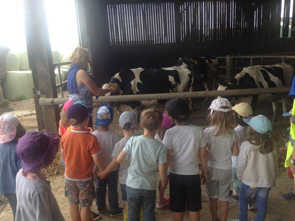 départ en bus à 13h45 puis découverte du plat des vaches..pour enfin voir de plus près les vaches en vrai