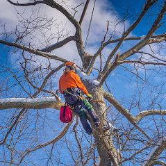 Hire a Professional Team for Exceptional Tree lopping in Carina
