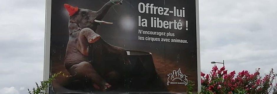 Lourdes – La ville vote l'interdiction des animaux dans les cirques