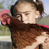 Poules pondeuses : exigeons la fin de l'élevage en cage !