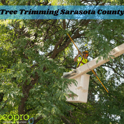 Questions To Ask Tree Trimming Experts In Sarasota County Before Hiring