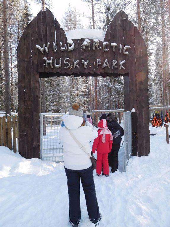Giro in slitta con gli husky - Lapponia (Finlandia)