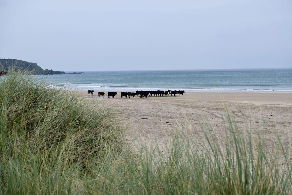 """A vous de remettre le puzzle  en place, avec, dans le désordre, """"White Rocks Beach"""", """"Cunshendun"""", """"Ballintoy"""" et un petit dernier avec """"Carrick-a-Rede Bridge"""" et......... les moutons..."""