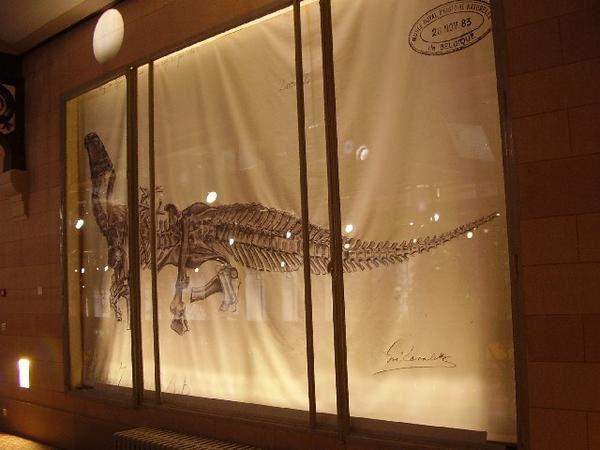 <p> Album photo de la nouvelle aile des Dinosaures au Muséum de Bruxelles </p> <p> Nous avons le grand plaisir, grâce à Christiane Fraivre que nous remercions chaleureusement ici, de vous présenter un album photo dédié à la nouvelle aile « Janlet » du Muséum des Sciences Naturelles de Belgique, et sa « Galerie des Dinosaures » flambant neuve. </p> <p> Vous pourrez enfin l'admirer en toute quiétude, et ce sans même devoir sortir de chez vous ! </p> <p> Bonne visite virtuelle ! </p> <p