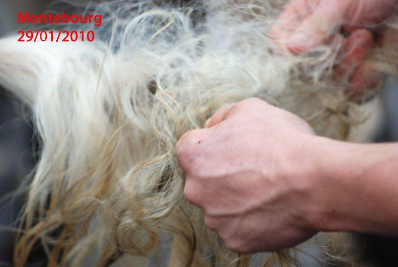 La foire de la chandeleur à Montebourg. 2 009, 2 010, 2 011