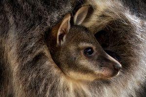 Biodiversité : la fragilité du monde animal magnifiée