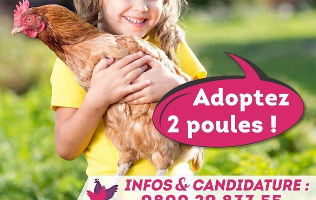 "Opération ""Adoptez 2 poules !"""