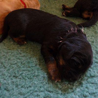 Faona, la chienne: 1 an déjà