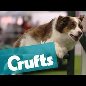 The World's Largest Dog Show: Crufts| Events & Competitions