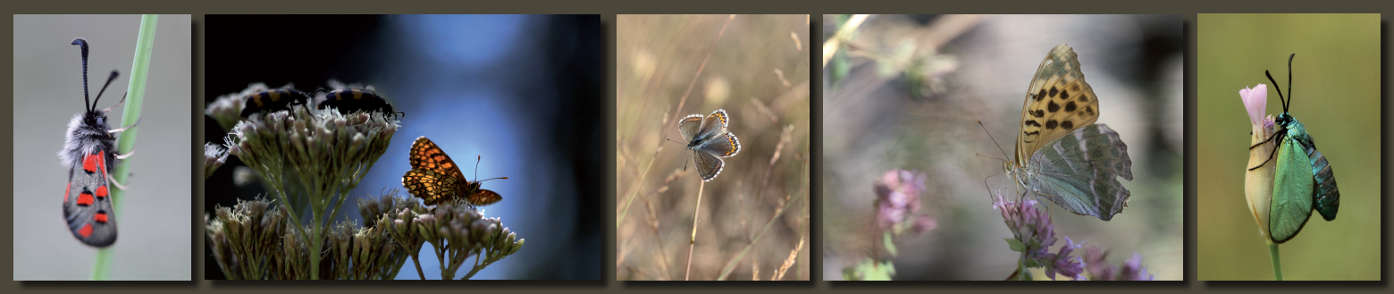 Des cartes papillonnantes pour donner des ailes à l'Œil Vert