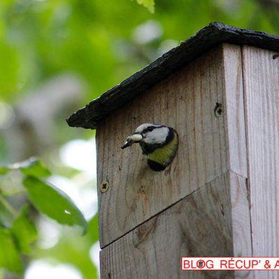 Nichoir à oiseaux sans blesser l'arbre
